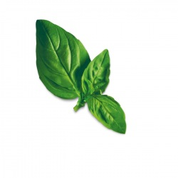 Capsule plante Plantui Basil Lemon (busuioc lamaios)