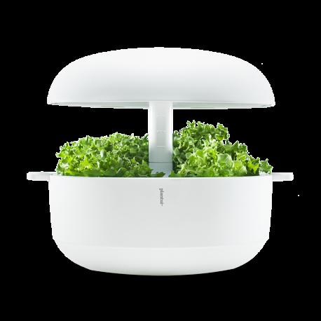 Ghiveci Smart Garden 6 alb