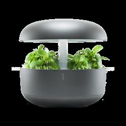 Ghiveci Smart Garden 6 gri