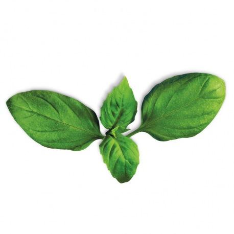Capsule plante Plantui Basil (busuioc)