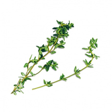 Capsule plante Plantui Thyme (cimbru)