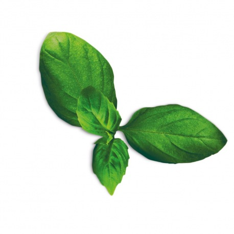 Capsule plante Plantui Basil Spicy (busuioc picant)
