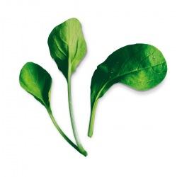Capsule plante Plantui Pok Choy