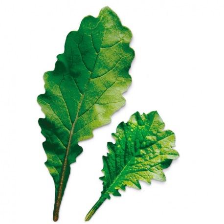 Capsule plante Plantui Leaf Radish (ridiche)