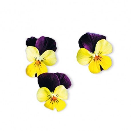 Capsule plante Plantui Viola Yellow Jump