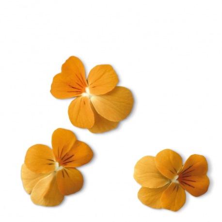 Capsule plante Plantui Viola Orange (portocalie)